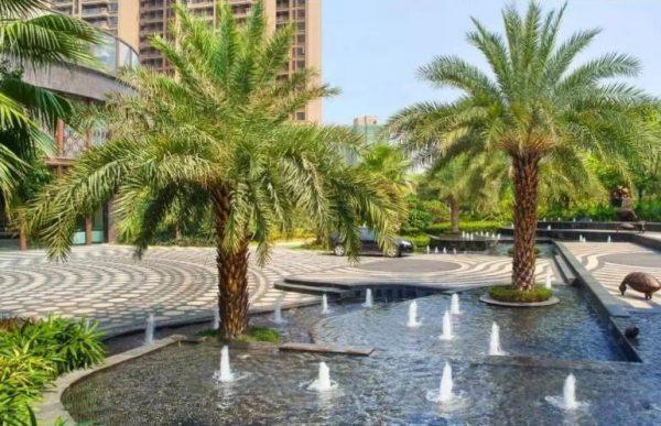 中东海枣树生长环境