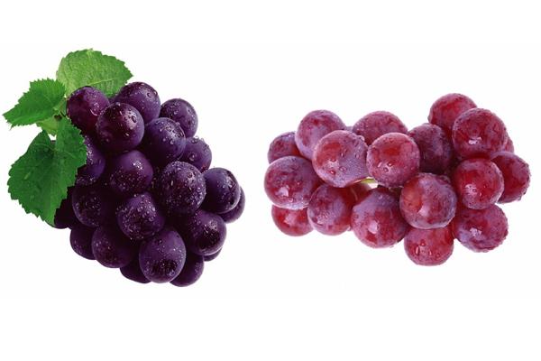 葡萄和提子的区别