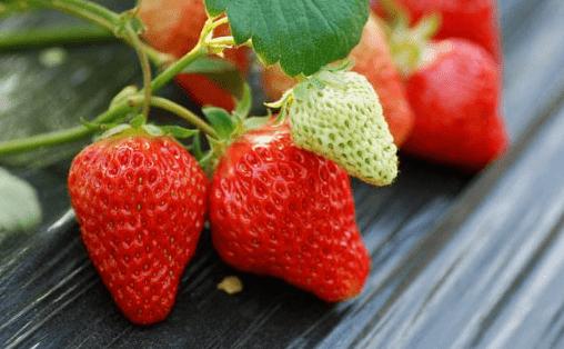 吃草莓特别注意