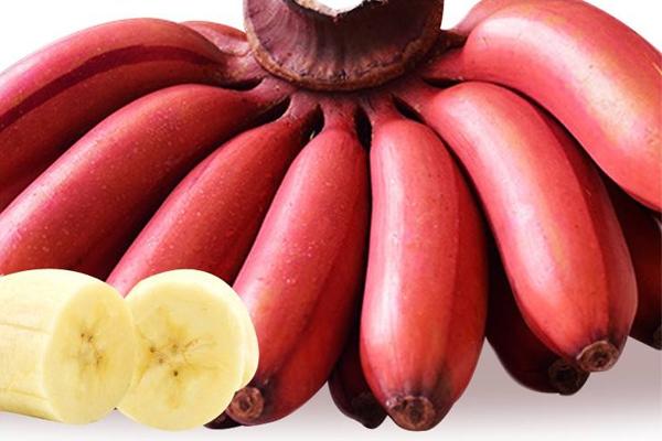红皮香蕉图片