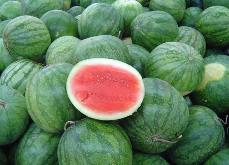 西瓜品种-无籽西瓜