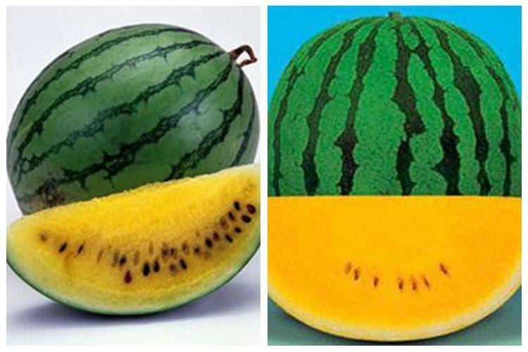 西瓜品种-黄瓤