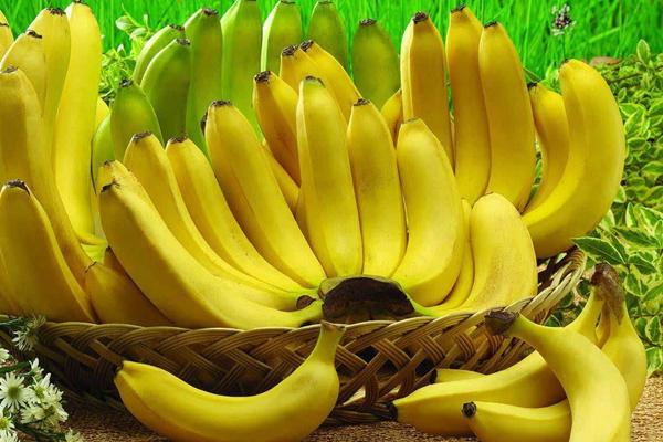 香蕉的种类-1