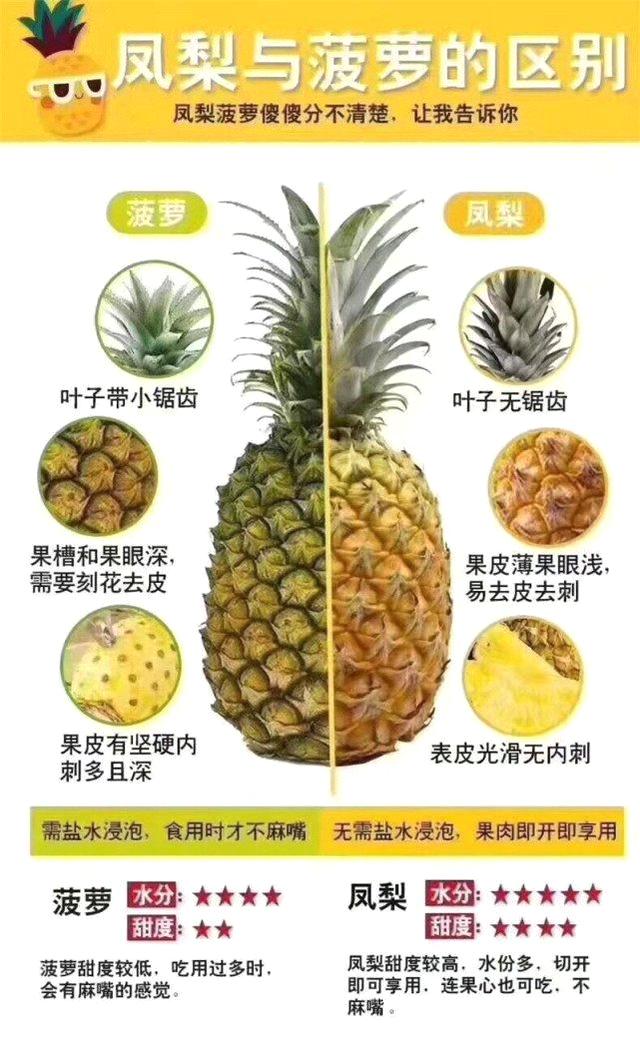 一张图分辨菠萝和凤梨的区别