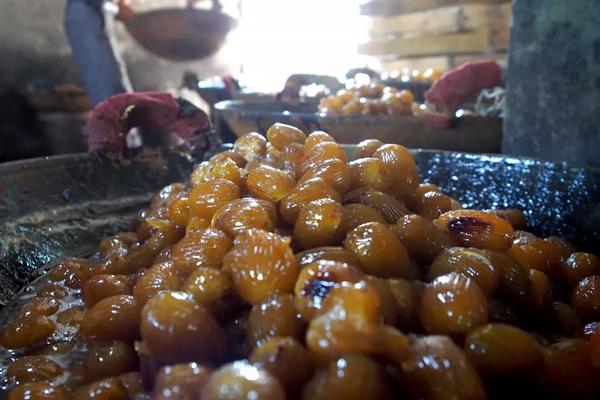 安徽蜜枣的传统制作-养浆
