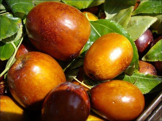 梨枣多少钱一斤