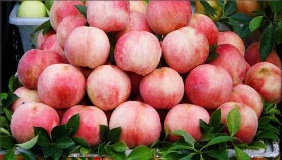 阳山水蜜桃图片