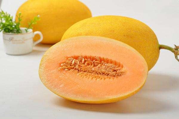 哈密瓜品种分类