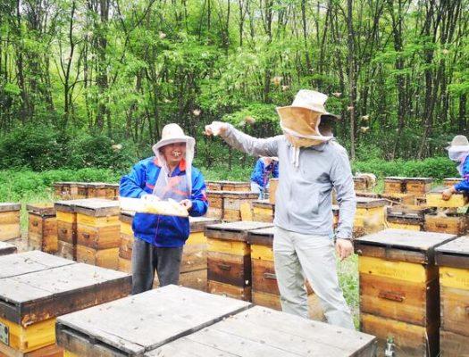 东北蜂蜜好还是南方蜂蜜好
