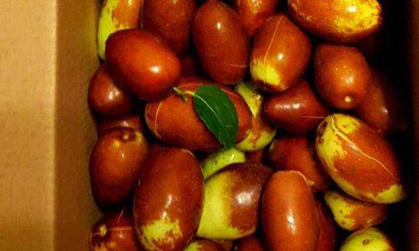鲜枣多少钱一斤